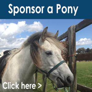 sponsor-pony