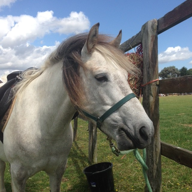 Pony Rides with Pebbles and the other Magpie ponies