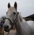 Samson waits in the yard for his next lesson